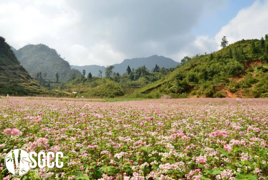 The scenery is as beautiful as Korea when traveling spring to Cao Bang
