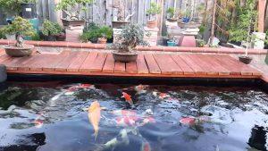 Top 10 dịch vụ thiết kế hồ cá koi đáng tin cậy nhất tại Tphcm