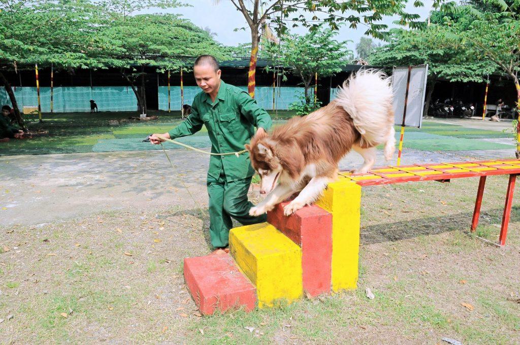 Hướng dẫn cách huấn luyện chó cơ bản ngay tại nhà
