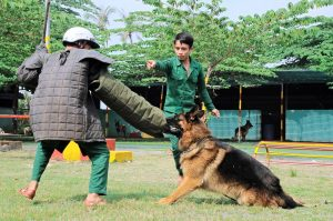 Dịch vụ huấn luyện chó cảnh chuyện nghiệp tốt nhất